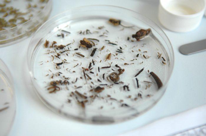 Water sample in a petri dish