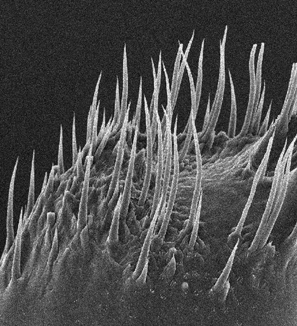 Observations on Shrimp Mandibles