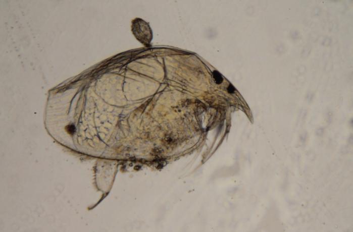 Freshwater Zooplankton Analysis 2