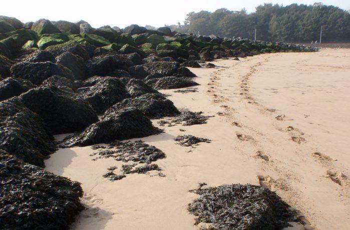 Rocky and Sandy Coastline Habitat