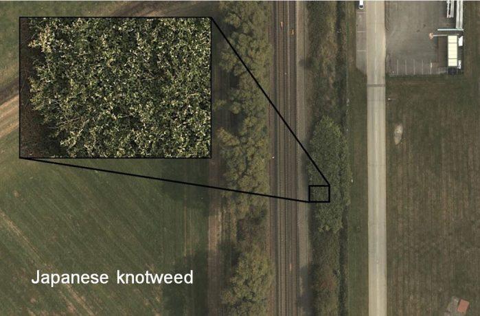 Invasive non-native plant species 2