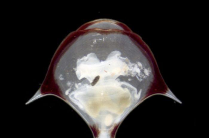 Marine Zooplankton 2