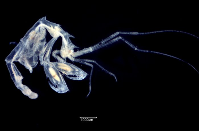 Microscope picture of sample