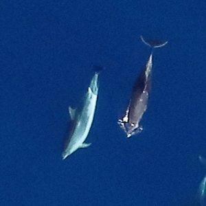 APEM hosts marine mammal survey workshop