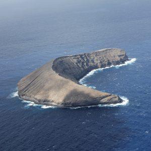 APEM returns to Hawaii for bird surveys