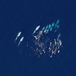 Offshore Wildlife Imagery