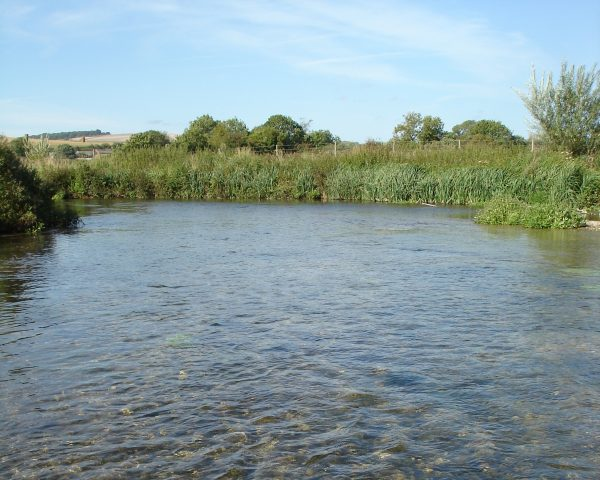 Clear stream flowing through rural summer landscape