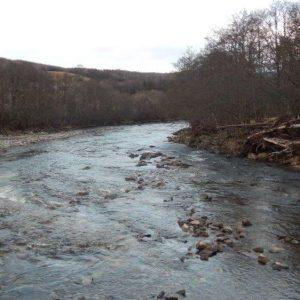 Salmon return as 'dry' river flows again