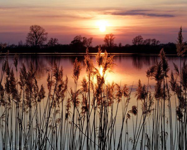 sunset at Ditton fen